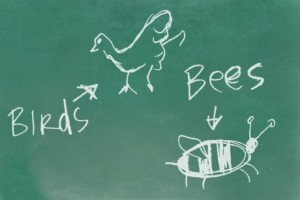 birds bees image